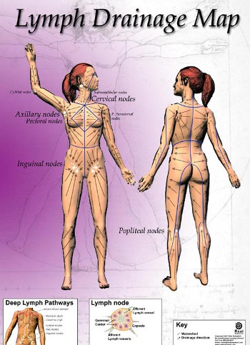 Lymph Drainage Map